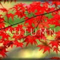 Autumn-square.jpg